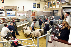 Auction auctioneer livestock market farm farming sheep Cumbria working UK meat rural economy economic