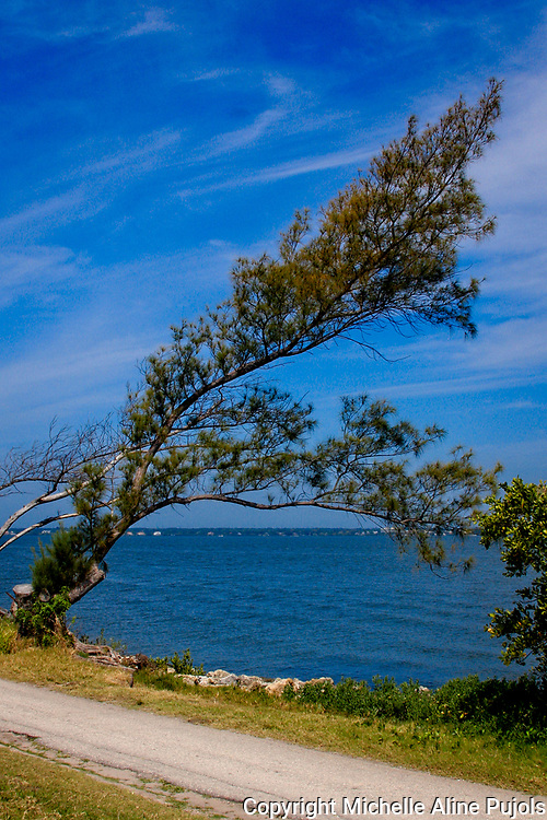 While driving along Tampa Bay, Florida, I spotted this wind swept tree. It is a testament to what perseverance can do.  A constant gentle breeze can shape a tree.