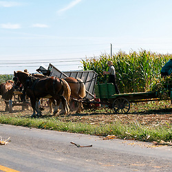 Amish farmers using horses to harvest corn in Lancaster County, PA