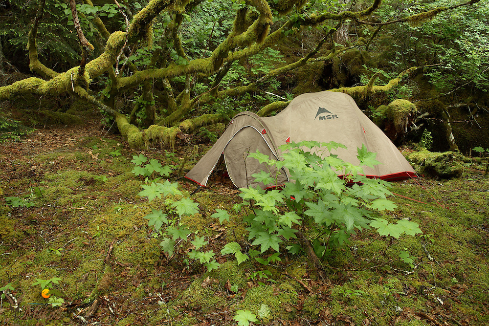 Tent in Rainforest Prince William Sound, AK
