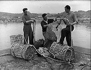 at Carna.  Boat Bulding with the Cloherty family..14/05/1959<br /> Micheal Canabhain (Ard Mhoir, Carna) right, who will shortly have a new Gael Linn boat is busy learning the tricks of the trade from two neighbours Mac Dara O Fleartaigh (left) and his brother Michael. They are preparing one of the Gael Linn experimental wire lobster pots.