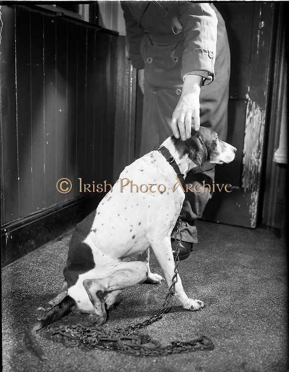 25/01/1957<br /> 01/25/1957<br /> 25 January 1957<br /> Blue Cross ?  (Mr. B. McManus) injured dog at vets, possibly somewhere on Dartmouth Road, Dublin.