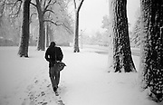 David Cox walks through snow under a row of cottonwoods to his home in Boulder, Colorado.
