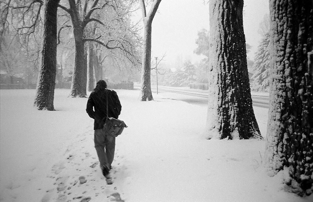 David Cox walks through snow under a row of cottonwoods to his home in Boulder, Colorado.