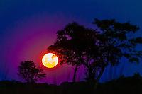 Moonrise, near Kwara Camp, Okavango Delta, Botswana.