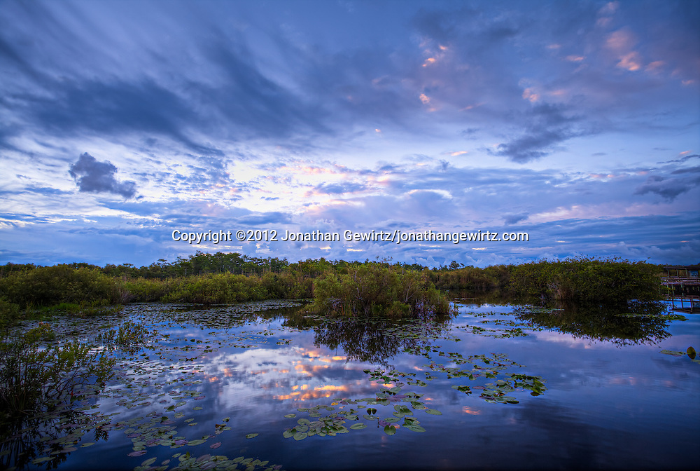 The morning sky lightens over a lily-covered pond on the Anhinga Trail in Taylor Slough, Everglades National Park, Florida. <br /> <br /> WATERMARKS WILL NOT APPEAR ON PRINTS OR LICENSED IMAGES.<br /> <br /> Licensing: https://tandemstock.com/assets/33554846