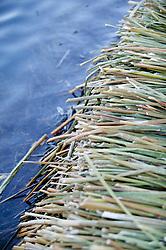 Reeds Of Floating Island