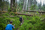 Zach Podell-Eberhardt (left) and Henry encounter blowdown trees along the West Coast Trail, British Columbia, Canada.