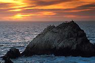 Sea birds on Seal Rocks, near the Cliff House, San Francisco, California