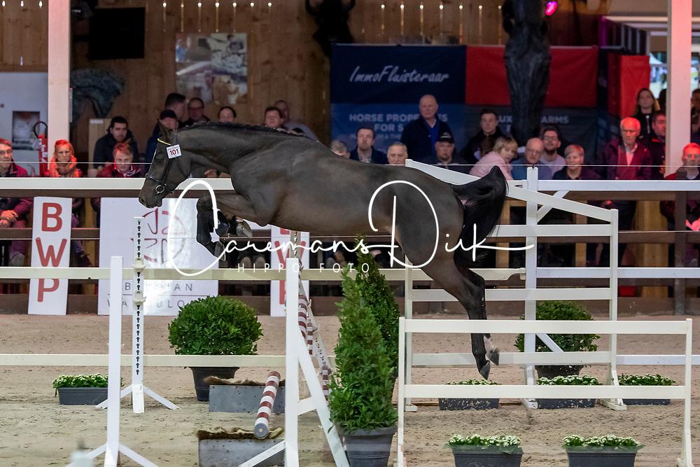 101, Quirambole van de Helle<br /> BWP Hengstenkeuring -  Lier 2020<br /> © Hippo Foto - Dirk Caremans<br />  18/01/2020