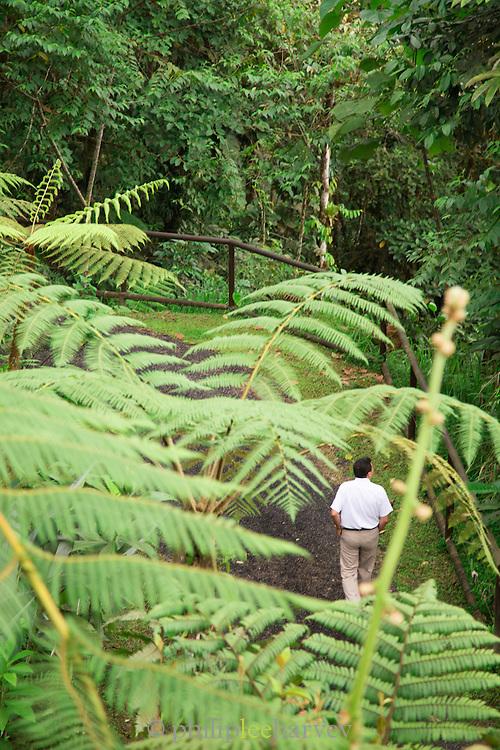 Visitor at Mashpi Lodge, Cloud Forest, Mashpi Reserve, Distrito Metropolitano de Quito, Ecuador, South America