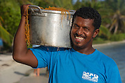 MAR Alliance staff Darren Castellanos & Edible algae (Euschimia spp.)<br /> Lighthouse Reef Atoll<br /> Belize<br /> Central America