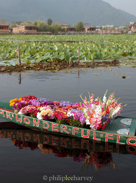 Mr Wonderfuls Flowers. A shikara, a local wooden boat, loaded with flowers to sell at the floating market, Srinigar, Kashmir, India