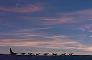 Dog sledding tour with The Silent Way, Vindelfjallen National Park, Vasterbotten, Lapland, Sweden. Ecotourism