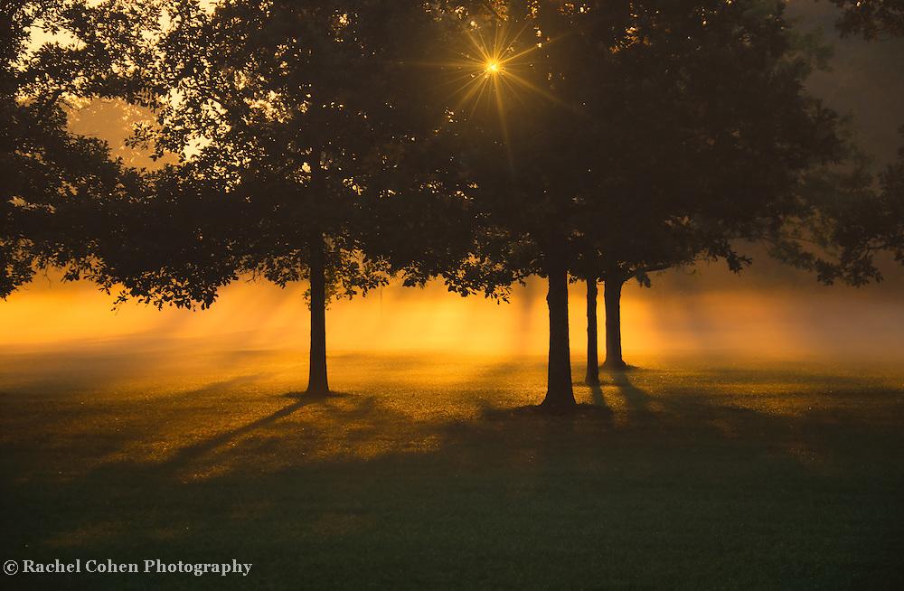 """Golden Burst of Morning""<br /> <br /> A burst of golden rays of sun through trees in silhouette and morning fog!!"
