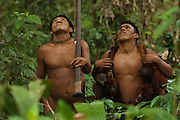 Huaorani Indian hunters - Ontogamo Kaimo & Geme Baiwa carrying the bushmeat. Gabaro Community. Yasuni National Park. Amazon rainforest, ECUADOR.  South America<br /> They have hunted 3 howler monkeys and 1 coati with their blowbun.<br /> This Indian tribe were basically uncontacted until 1956 when missionaries from the Summer Institute of Linguistics made contact with them. However there are still some groups from the tribe that remain uncontacted.  They are known as the Tagaeri. Traditionally these Indians were very hostile and killed many people who tried to enter into their territory. Their territory is in the Yasuni National Park which is now also being exploited for oil.