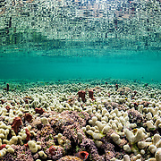 A shallow hard coral reef in The Bahamas.