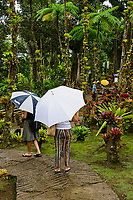 France, Martinique, le Jardin de Balata, jardin botanique de plantes tropicales // France, Martinique, Balata tropical garden