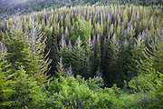 Forest in the upper Methow Valley, Okanogan National Forest, Washington.