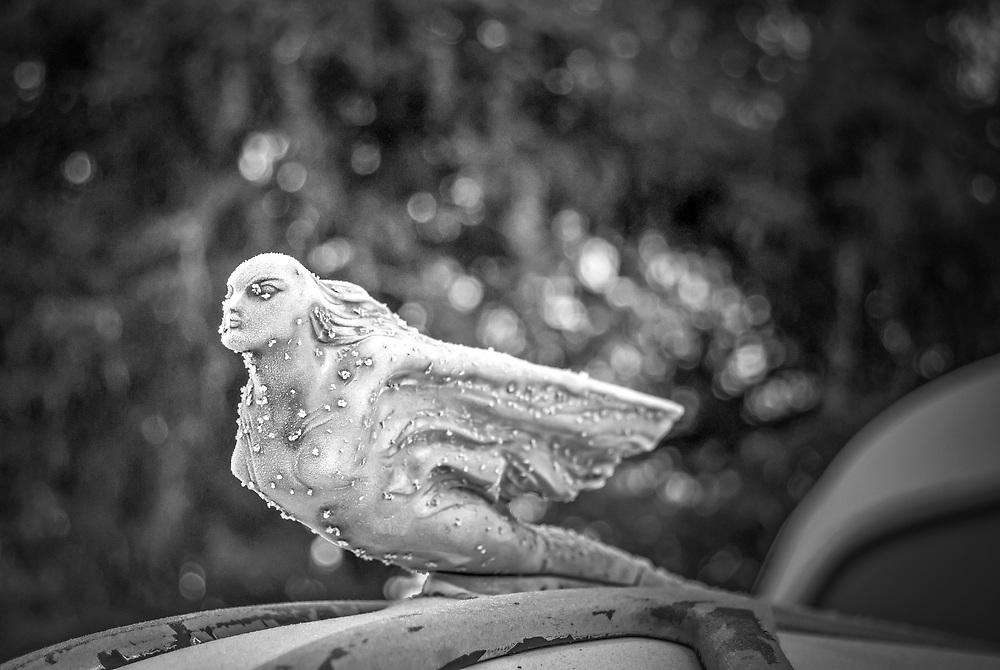 I was just so taken by this hood Ornament.  The frost that covered this angel set her apart from all others I've seem.    © Dana M. Gray   danamgray.com   Grayspace Studios on Facebook