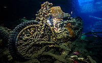 A BSA M20 motorbike, provides a poignant reminder of both the futility of war and the ability of nature to heal. Now completely encrusted in coral, it was part of a cargo on the SS Thistlegorm, destined for the 8th Army in the Western desert. The bike (and lots of other fascinating cargo) has been on the sea bed at Sha'ab Ali, near Ras Mohammed, Egypt since 1941.