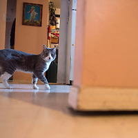 Rose Yazzie's cat Gasby walks her the spot in the kitchen where the wall has separated from the floor, Tuesday in their Navajo Housing Authority home. Bugs will crawl in to their home through this crack in the floor caused by the unstable foundation.