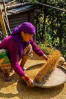 Gurka woman sifting rice, village of Chitepani in the foothills of the Himalayas, near Pokhara, Nepal. Gurkha men are soldiers native to the Indian subcontinent of Nepalese nationality and ethnic Nepalis of Indian nationality recruited for the British Army, Nepalese Army, Indian Army, the UN, etc.