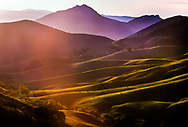 Golden sunset light falls across purple mountains and green pastoral hills in Central California