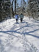 Woodland walk through freshly fallen snow at Drumlin Farm, Lincoln, Massachusetts.