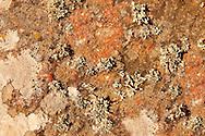 Green Lichens growing on rocks on the Greek Island of Ios.