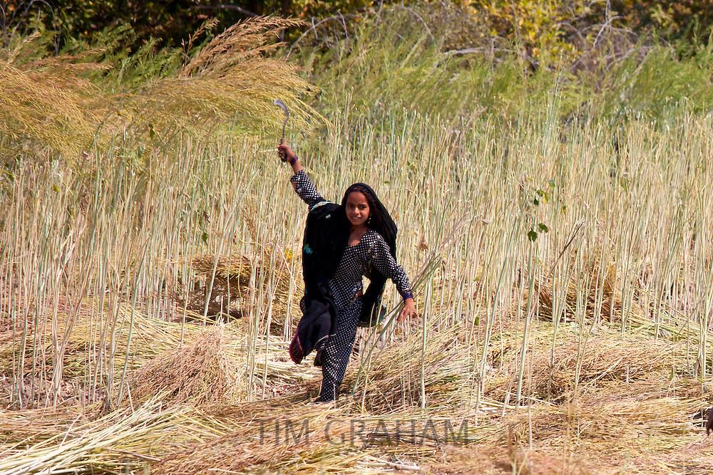 Indian girl agricultural worker at farm at Sawai Madhopur near Ranthambore in Rajasthan, Northern India