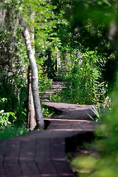 04 June 2014. Jean Lafitte National Historic Park, Louisiana.<br /> Raised walkway over the swamp at the Barataria Preserve wetlands south or New Orleans.<br /> Charlie Varley/varleypix.com