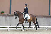 KWPN Young Dressage Talents