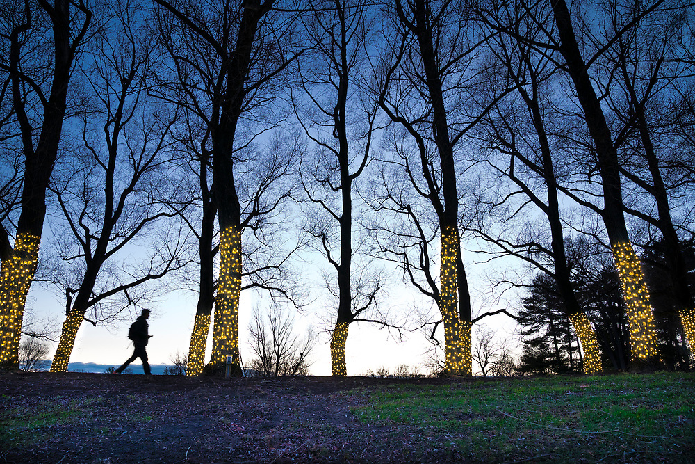 The willows of Willow Path are decorated in holiday lights Dec. 6, 2017 in Hamilton, N.Y.<br /> Mark DiOrio / Colgate University