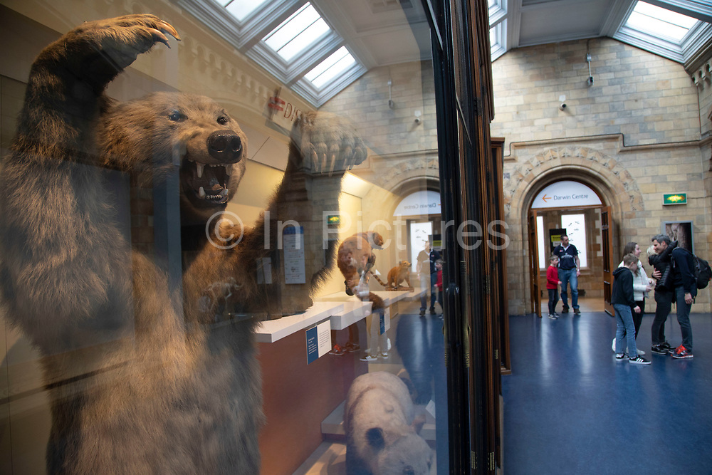 Mammals exhibition room at the Natural History Museum in London, England, United Kingdom. The museum exhibits a vast range of specimens from various segments of natural history. The museum is home to life and earth science specimens comprising some 80 million items within five main collections: botany, entomology, mineralogy, paleontology and zoology. The museum is a centre of research specialising in taxonomy, identification and conservation.