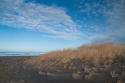 Dunes and Beach at Loomis Lake State Park, Long Beach, Washington, US