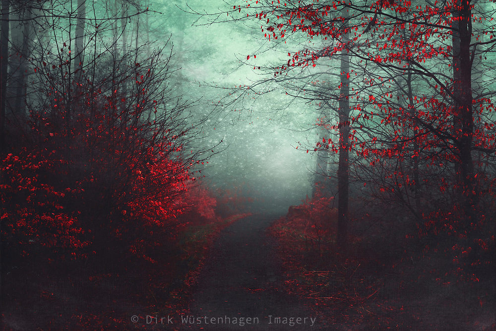 Misty morning in the forest<br /> Prints/Home Decor--> https://www.redbubble.com/shop/ap/25209948?asc=u