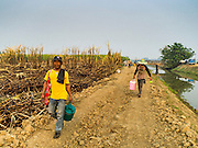02 FEBRUARY 2016 - NONG LAN, KANCHANABURI, THAILAND: Migrant sugar cane workers walk out to the fields they were hired to harvest. Thai sugar cane yields are expected to drop by about two percent for the 2015/2016 harvest because of below normal rainfall. The size of the crop is expected to increase slightly though because farmers planted more sugar cane acreage this year. Thailand is the second leading exporter of sugar in the world. Thai sugar growers are hoping a good crop would make up for shortages in global markets caused by lower harvests in Brazil and Australia, where sugar yields have been stunted by drought. Because of the drought in Thailand, sugar exports are expected to drop by up to 20 percent, contributing to a global sugar shortage. The drought is is also hurting the quality of Thai sugar, because sugarcane grown in drought is less sweet than normal so mills need to process more cane to make the same amount of sugar. Thai sugar farmers have lost 20 percent to 30 percent of their output this year because of the drought.           PHOTO BY JACK KURTZ