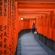 Fushimi Inari Shrine; Kyoto, Japan