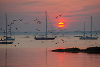 Sunrise at Laite Beach, Camden, Maine.  ©2015 Karen Bobotas Photographer