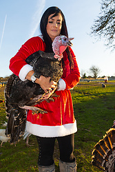 Amey Evans rescues turkeys and keeps them at her home in the Kent countryside near Sittinbourne where they live out their lives in the fresh air without fear of being anyone's Christmas dinner.. Sittingbourne, Kent, December 24 2018.