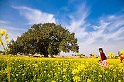 Young school girl, Jasbir Kaur, runs along a yellow mustard field with smaller brother in Chita Kalaan village, Punjab, India.