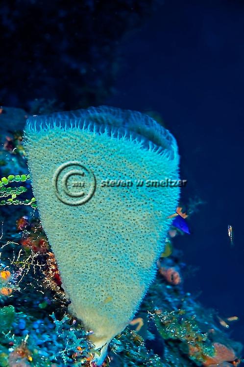 Azure Vase Spongeon Chinese Wall, Grand Cayman