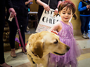27 MARCH 2019 - ST PAUL, MN, USA:  MAJESTA CISNEY, 3 years old, from St. Paul, MN, pets a therapy dog at a rally to support domestic violence survivors. About 200 people came to the Minnesota State Capitol to rally for two bills in the Minnesota legislature. HF464 would invest in intervention programming for the perpetrators of domestic violence and HF479 supports state funding for domestic violence prevention in under served communities.  PHOTO BY JACK KURTZ