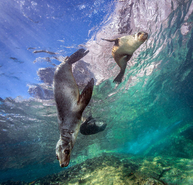 La Paz, Sea Lions