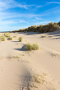 Coastal sand dunes with Marram Grass, one of the Ammophila grasses ( Xerophyte ) at sandy Holkham Beach, North Norfolk coast UK