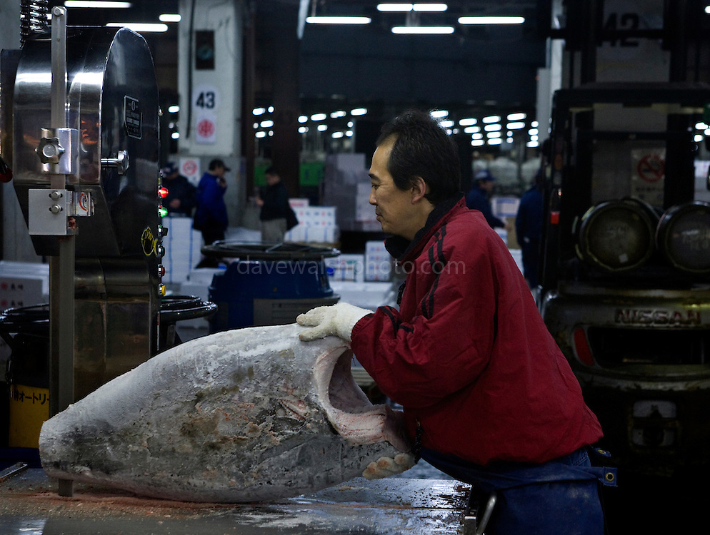 Cutting frozen tuna with a bandsaw at Tokyo Tsukiji Fish Market..Tokyo Metropolitan Central Wholesale Market or Tsukiji Fish Market is the largest fish market in the world.