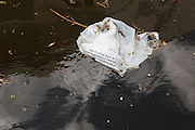 Biodegradeable plastic bag in water