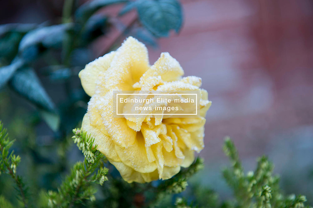 Autumn has ended as the first signs of winter appear as frost covers garden flowers, Angie Isac   EEm Monday 29 October 2018