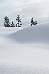 Snow dunes with trees against sky